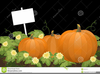Clipart Of Pumpkin Patches Image