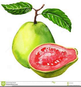 guava clipart free images at clker com vector clip art online royalty free public domain guava clipart free images at clker