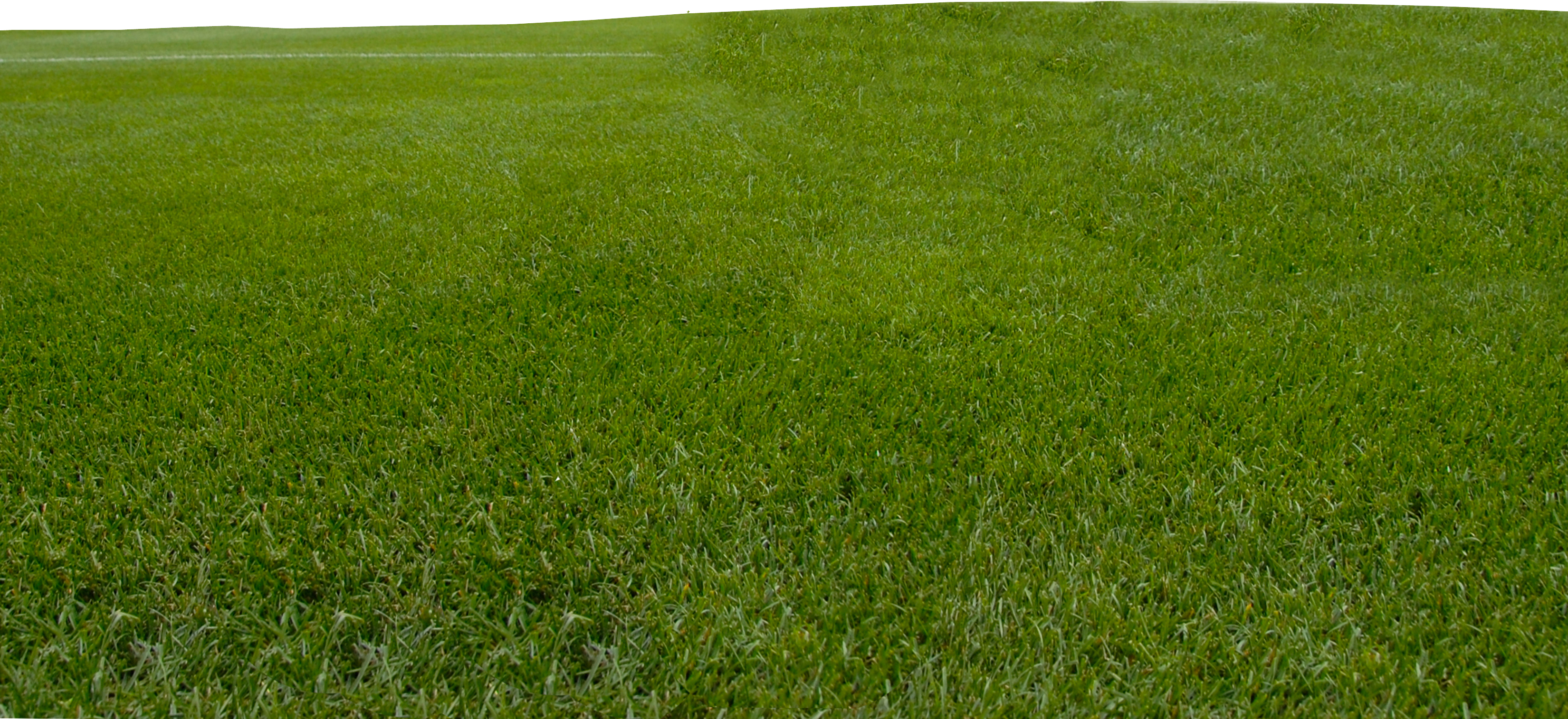 Grass free images at vector clip art online for Grass landscape