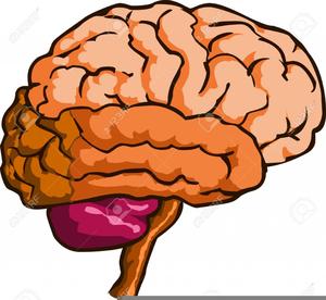 brain clipart royalty free free images at clker com vector clip rh clker com Brain Cartoon Clip Art Free Brain Cartoon Clip Art Free