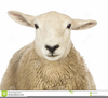 Clipart Sheep Head Image