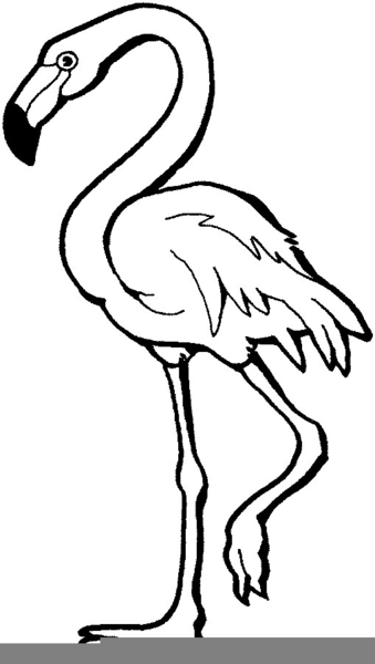 Flamingo clipart, Flamingo Transparent FREE for download on WebStockReview  2020