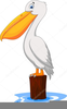 Cartoon Pelican Clipart Image