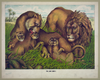 The Lion Family Image
