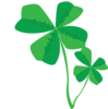 Clovers Image