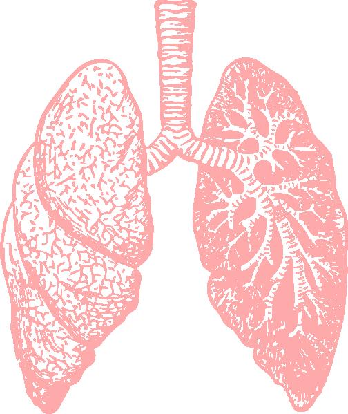 Lungs Clip Art At Clker Com Vector Clip Art Online