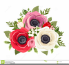 Anemone Flower Clipart Image