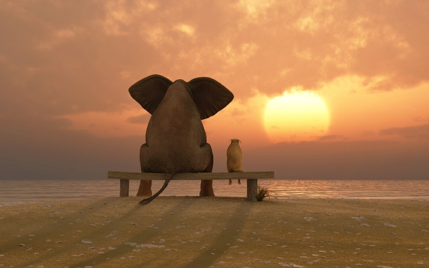 funny friends beach elephant dog sunset hd wallpaper | free images
