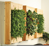 Indoor Living Wall Image
