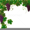 Free Clipart Of Grapes And Vines Image