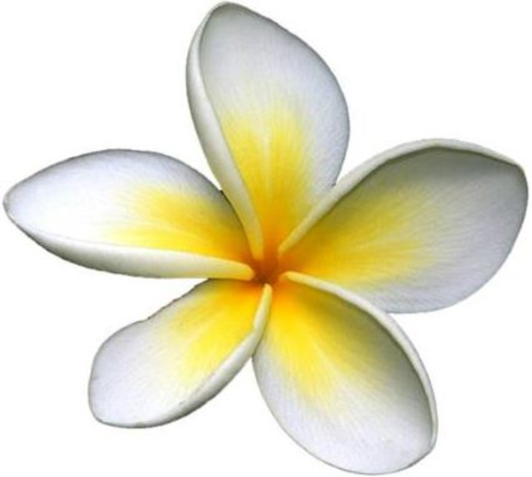 frangipani free images at clker com vector clip art purple pansy clip art Pansy Border
