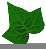 Poison Ivy Clipart Image