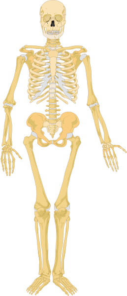 Skeleton Clip Art At Clker Com