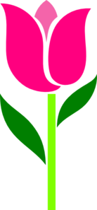 Pink Tulip Leaves Askew Clip Art
