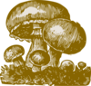 Mushroom Illustration Clip Art