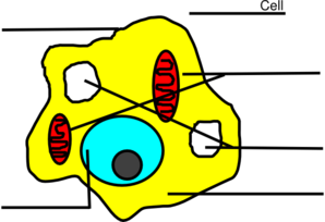 Basic Animal Cell Diagram Unlabeled Clip Art at Clker.com ...