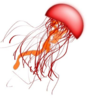 Red Jellyfish Clip Art