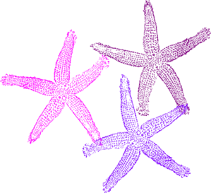 Three Starfish Clip Art