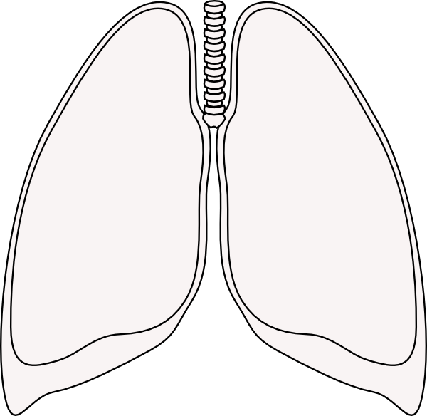 lung clear lung clip art at clker com