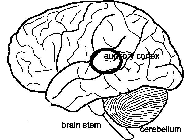 Simple Brain Diagram Clip Art at Clker.com - vector clip ...