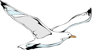 Flying Sea Gull Clip Art