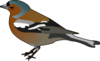Male Chaffinch Bird Clip Art