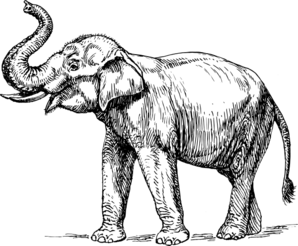 Indian Elephant Clip Art