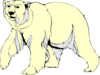 Polar Bear Walking Clip Art