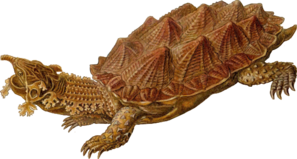 Prehistoric Spiked Turtle Clip Art