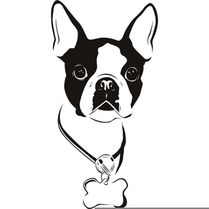 Clipart Boston Terrier Image