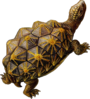 Prehistoric Turtle Walking Clip Art