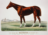 The Racing King Salvator, Mile Record 1:35 1/2: By Prince Charlie  Dam Salina By Lexington Image