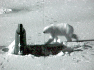 Polar Bear Attacks Sub? 3 Image