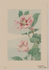 Branch With Leaves And Camellia Blossoms Clip Art