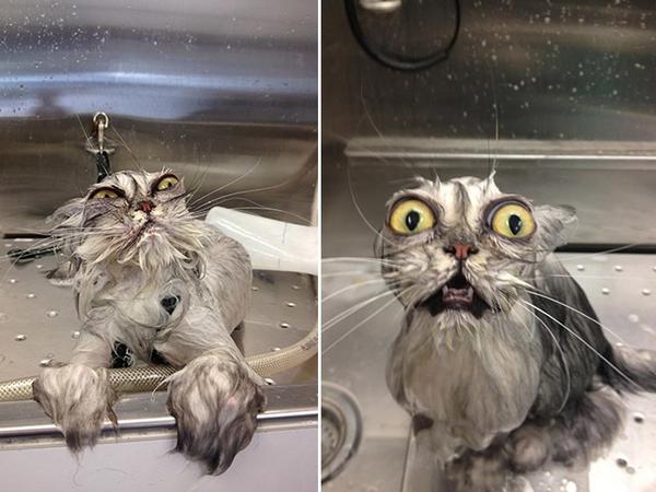 Frazzled Cat Clipart | Free Images at Clker.com - vector clip art ...