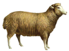 Animated Sheep Clipart Image