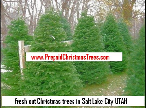 Christmas Trees Utah Image