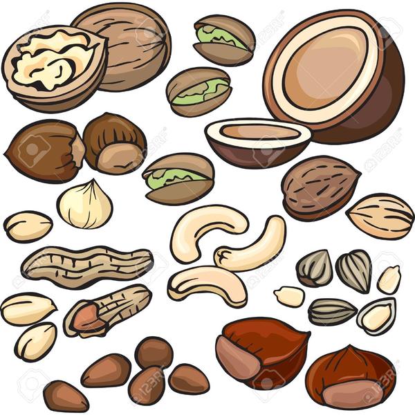 free nuts clipart free images at clker com vector clip art rh clker com nut pictures clip art nut pictures clip art