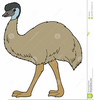 Emu Cartoon Clipart Image