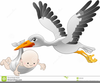 Free Clipart Stork Carrying Baby Image