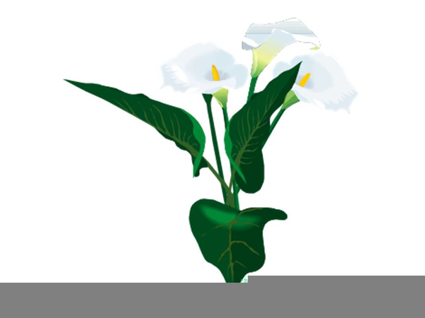 Calla Lily Border Clipart Free Images At Clkercom Vector Clip