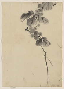 [branch With Leaves And Berries] Image
