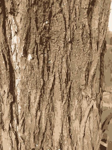 Tree Bark Texture Clip Art at Clker.com - vector clip art ...