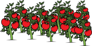 Tomato Patch Clip Art
