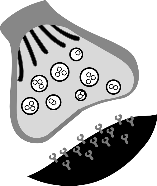 Synapse Part 1 Clip Art at Clker  vector clip art