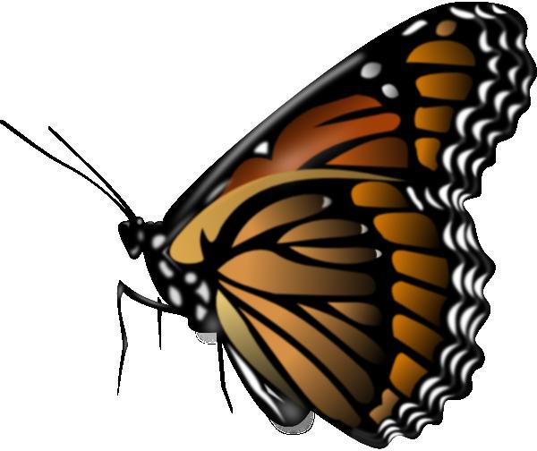 Butterfly net Vector Image of Objects © robertosch #10355 ...