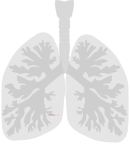 Lungs Lung Clip Art