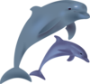 Dolphins Clip Art
