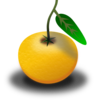 Orange Fruit Clip Art
